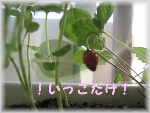 Img_13871